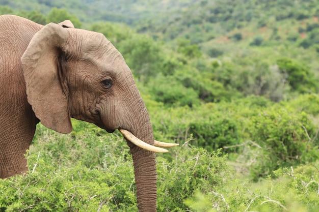 Colpo di messa a fuoco selettiva di un magnifico elefante con bellissimi alberi Foto Gratuite