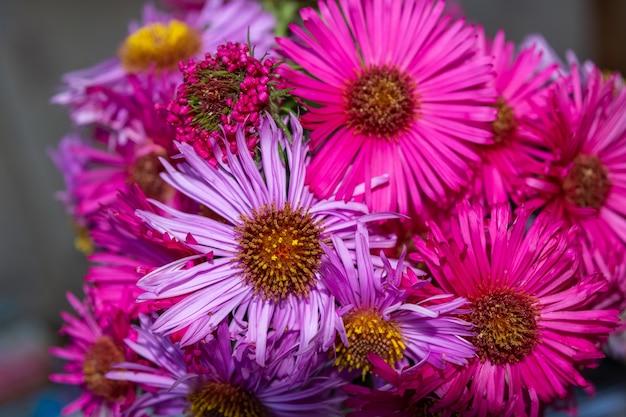 Colpo di messa a fuoco selettiva dei magnifici fiori rosa e viola aster in un bouquet Foto Gratuite