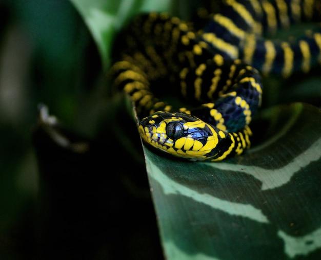 Селективный снимок красивой змеи-андрофилии бойга на зеленом листе Бесплатные Фотографии
