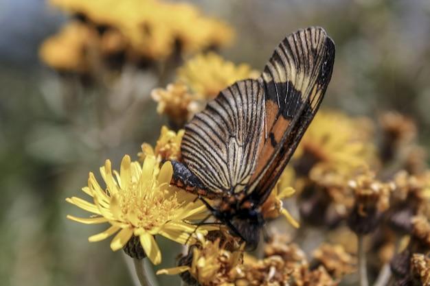 黄色い花に美しい蝶の選択的なフォーカスショット 無料写真