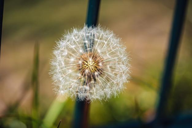 庭の緑の植物の中の美しいタンポポの選択的なフォーカスショット 無料写真