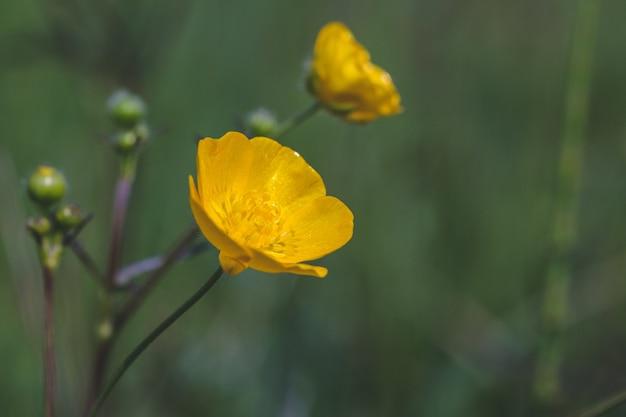 晴れた日に撮影されたフィールドで美しい黄色い花の選択的なフォーカスショット 無料写真