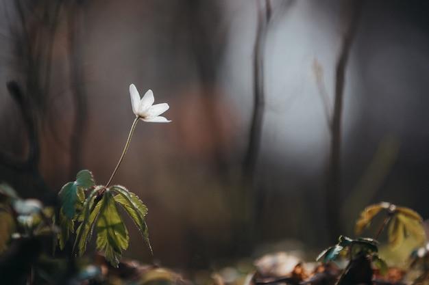 거리에 녹지와 피는 흰 꽃의 선택적 초점 샷 무료 사진