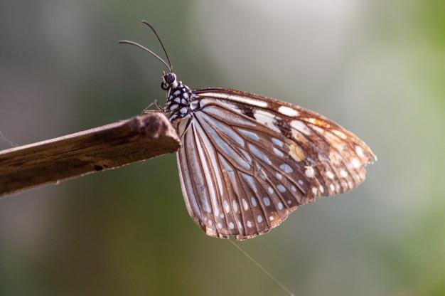 Селективный фокус выстрел из бабочки с кистью на кусок дерева Бесплатные Фотографии