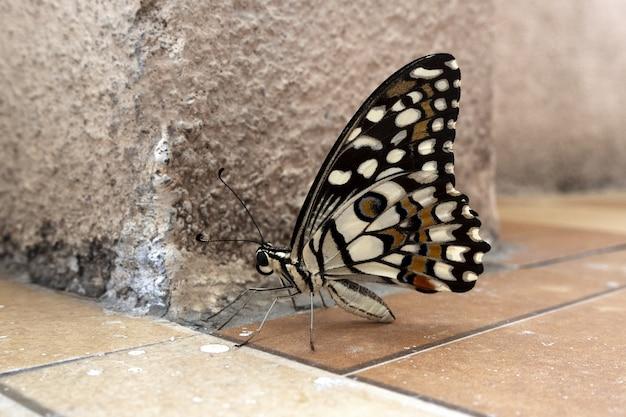 Селективный фокус выстрел красочной бабочки на коричневой земле Бесплатные Фотографии