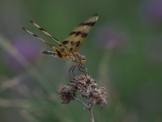 Снимок селективной фокусировки стрекозы, сидящей на цветке Бесплатные Фотографии