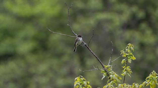 지점에 자리 잡고 Flycatcher의 선택적 초점 샷 무료 사진