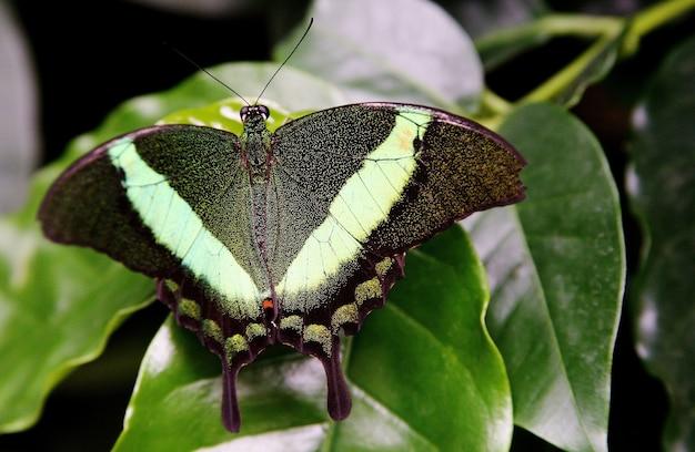 Mainau 섬에 잔디에 녹색 호랑 나비과의 선택적 초점 샷 무료 사진
