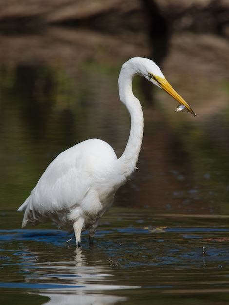물 속에서 헤론의 선택적 초점 샷 무료 사진