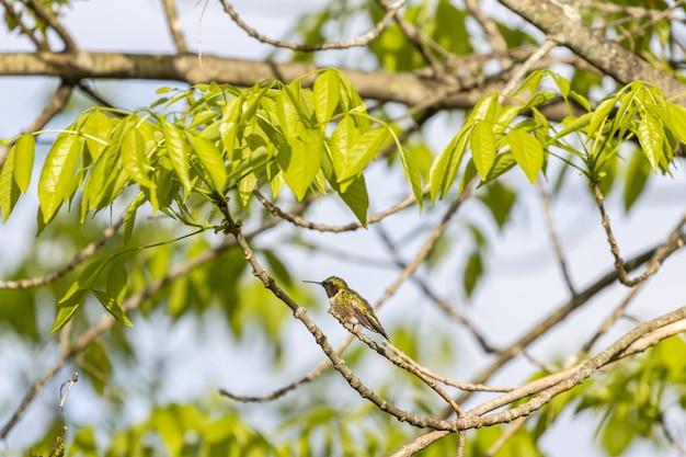 Селективный снимок колибри на ветке дерева Бесплатные Фотографии