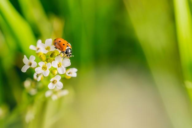화창한 날에 캡처 한 필드에서 꽃에 무당 벌레 딱정벌레의 선택적 초점 샷 무료 사진