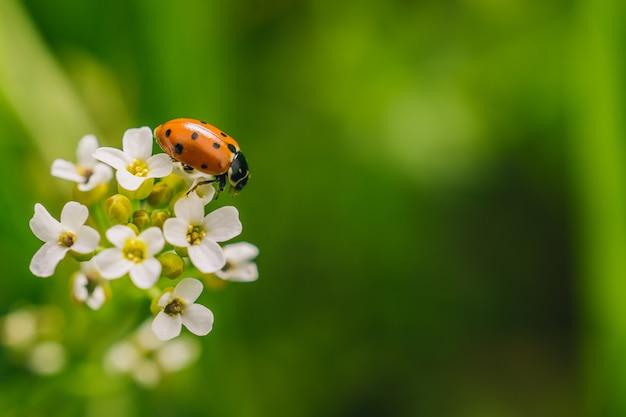 Селективный снимок жука-божьей коровки на цветке в поле, сделанный в солнечный день Бесплатные Фотографии
