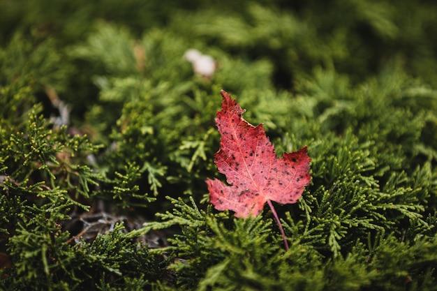 赤い葉の選択的なフォーカスショット 無料写真