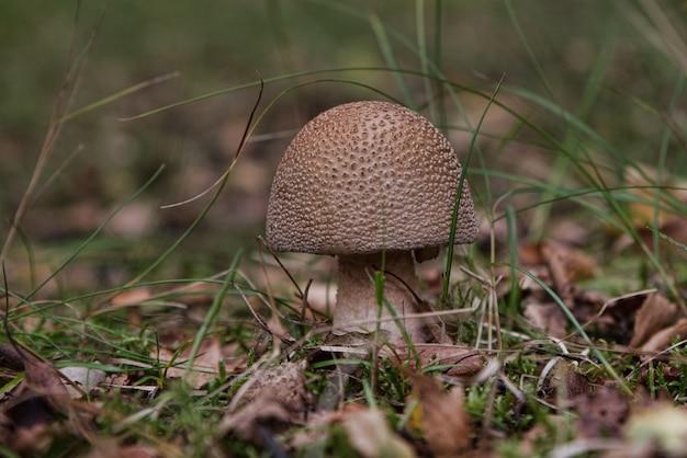 Селективный снимок небольшого гриба, растущего в почве Бесплатные Фотографии