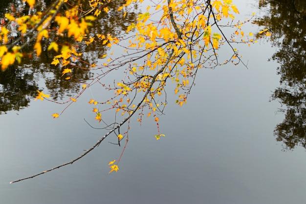 黄色の葉と木の枝のセレクティブフォーカスショット 無料写真