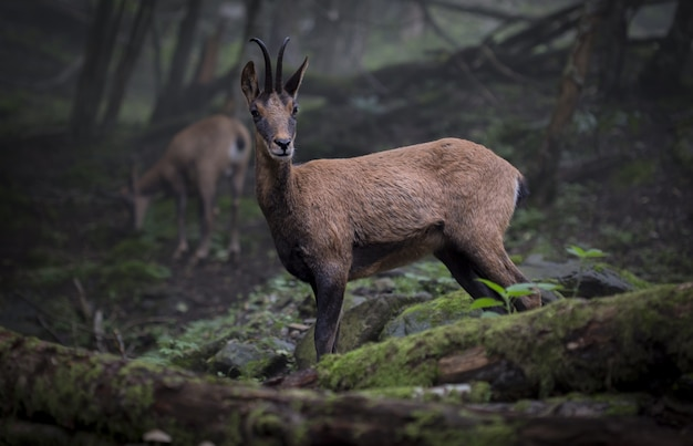 Селективный снимок дикого животного посреди леса Бесплатные Фотографии