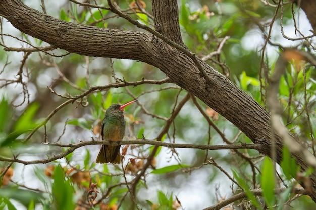 木の枝に座っているエキゾチックな鳥のセレクティブフォーカスショット 無料写真