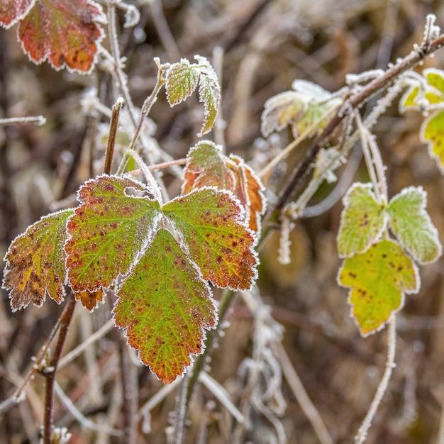 Селективный фокус выстрел красивых зеленых осенних листьев на деревянных ветках Бесплатные Фотографии
