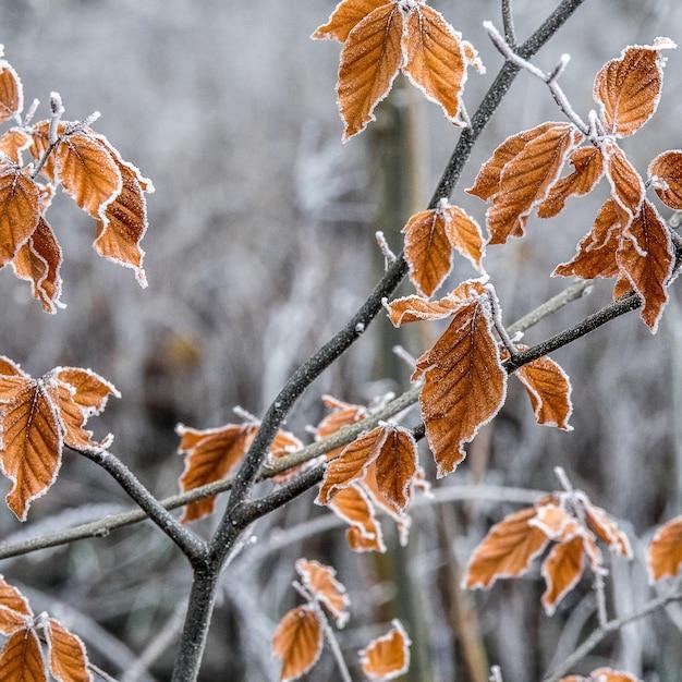 霜で覆われた紅葉の枝のセレクティブフォーカスショット 無料写真
