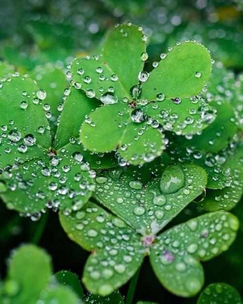 Селективный фокус выстрел из капель росы на зеленых листьях Бесплатные Фотографии