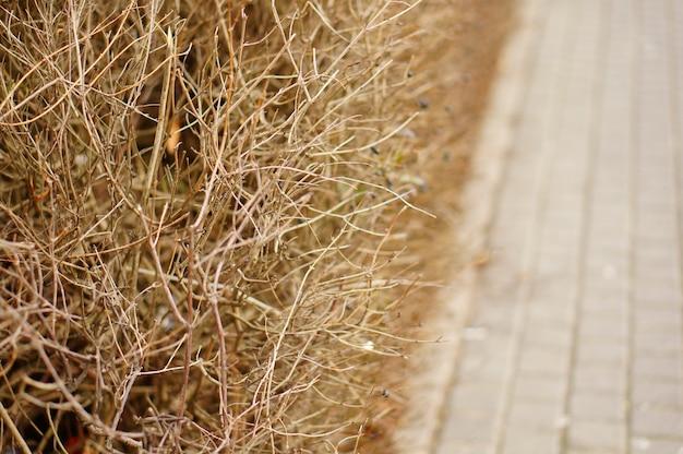 歩道近くの乾燥した植物や草のセレクティブフォーカスショット 無料写真