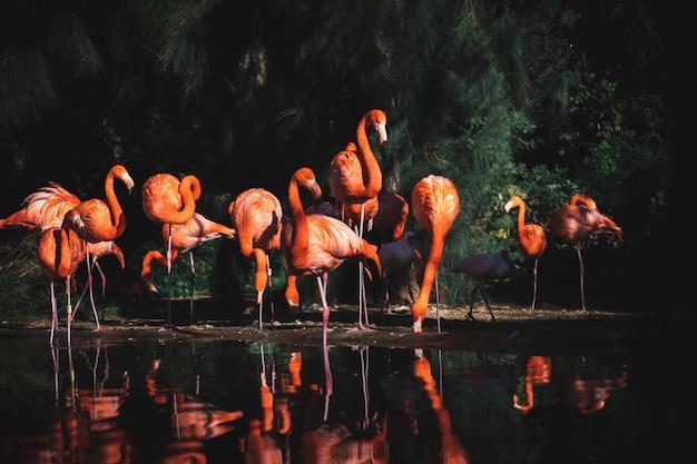 木々に囲まれた水の近くのフラミンゴのセレクティブフォーカスショット 無料写真