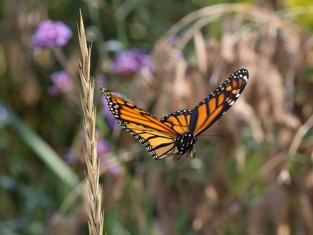 Селективный фокус полета летающей пятнистой деревянной бабочки Бесплатные Фотографии