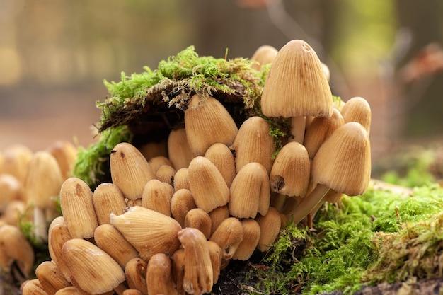 Селективный снимок грибов, растущих на замшелой земле Бесплатные Фотографии