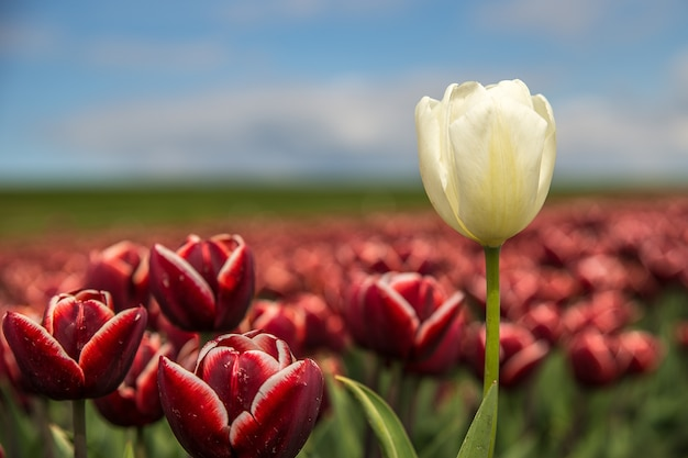 近くにある赤と白の花のセレクティブフォーカスショット 無料写真