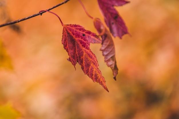枝の赤い葉の選択的なフォーカスショット 無料写真