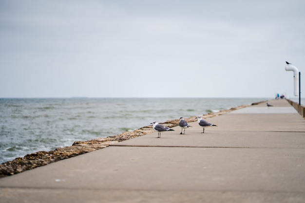 ビーチの隣の歩道でカモメの選択的なフォーカスショット 無料写真
