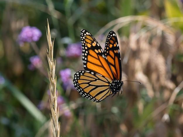 Селективный снимок пятнистой деревянной бабочки на маленьком цветке Бесплатные Фотографии