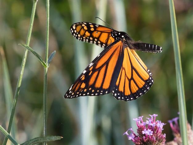 Селективный снимок пестрой деревянной бабочки на маленьком цветке Бесплатные Фотографии