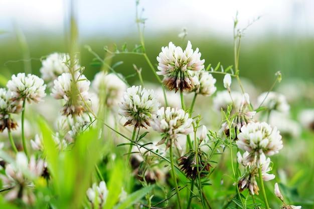 Селективный фокус выстрел из белых цветов в поле Бесплатные Фотографии