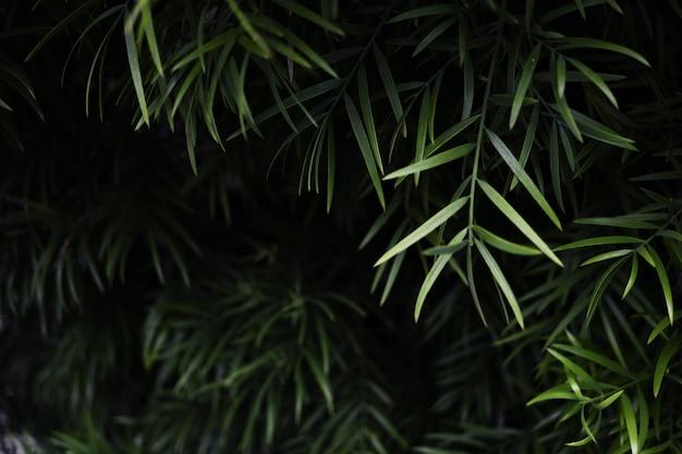 Colpo di messa a fuoco selettiva di piante con foglie verdi Foto Gratuite