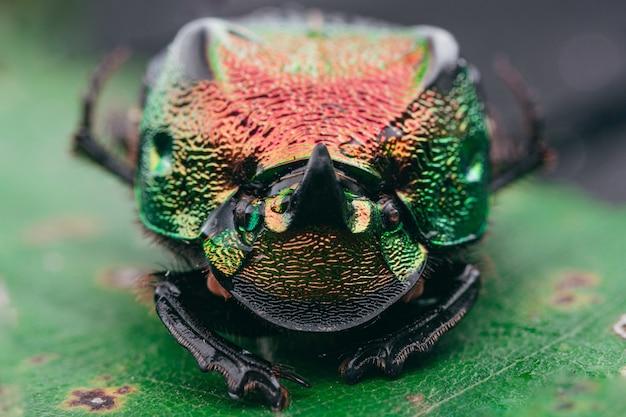 Colpo di messa a fuoco selettiva di uno scarabeo arcobaleno Foto Gratuite