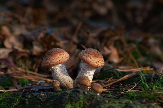 Colpo di messa a fuoco selettiva di piccoli funghi che crescono nella foresta Foto Gratuite