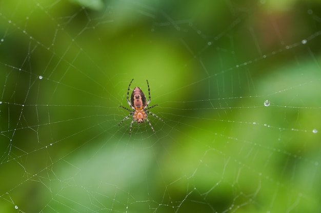 Selective focus shot of a spider in a web  with a blurred background Free Photo