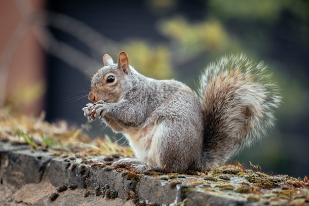 Selective focus shot of a squirrel in the yard Free Photo