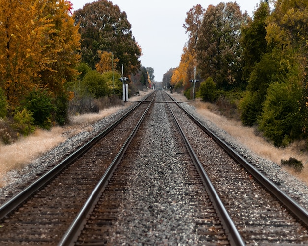 Selective focus shot of train tracks in the middle of green and yellow trees Free Photo