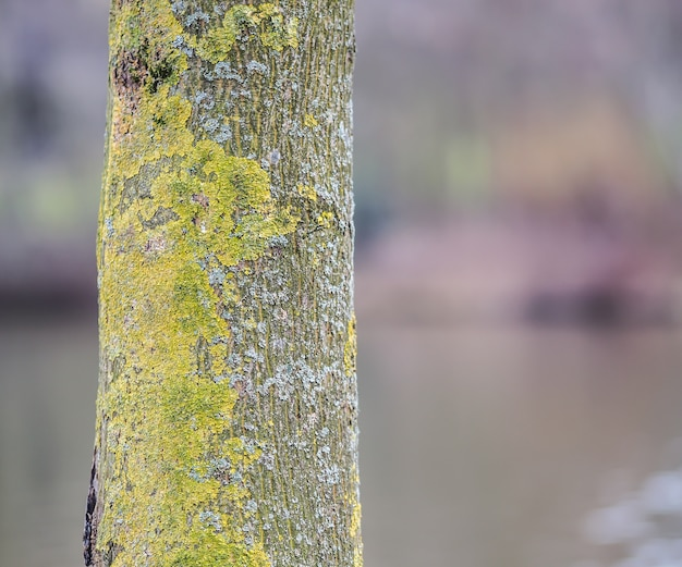 Selective focus of a tree bark covered in mosses under the sunlight at daytime Free Photo