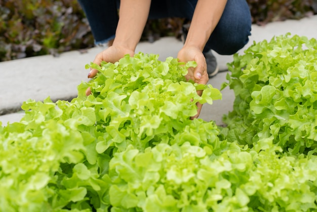 Senior adult couple picking vegetable from backyard garden Free Photo