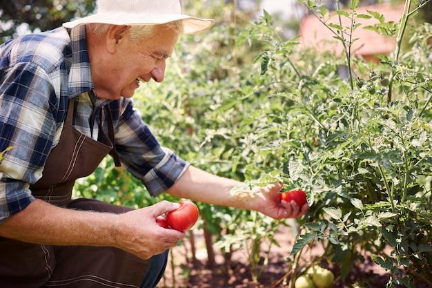 Uomo maggiore che lavora nel campo con le verdure Foto Gratuite