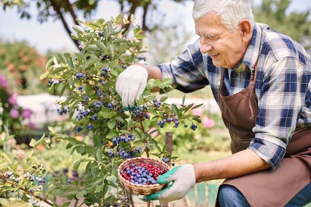 果物とフィールドで働く年配の男性 無料写真