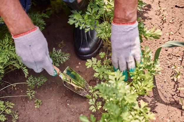 식물 분야에서 일하는 수석 남자 무료 사진