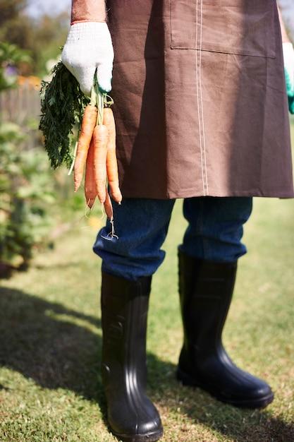 야채와 함께 분야에서 일하는 수석 남자 무료 사진