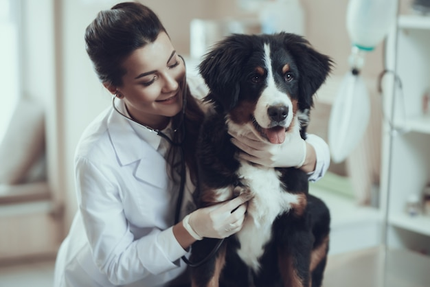 女性獣医抱きしめるsennenhund心を調べる Premium写真