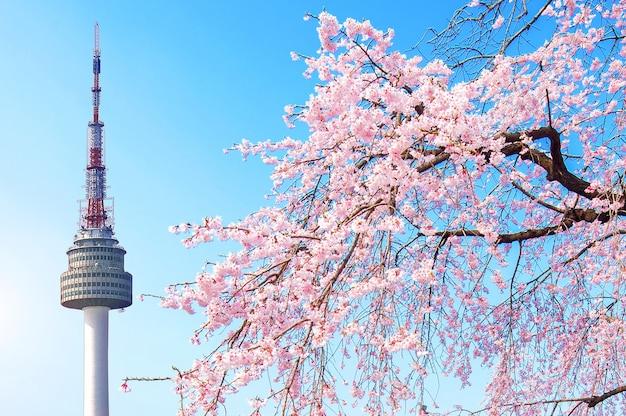 서울 타워와 핑크 벚꽃, 봄의 사쿠라 시즌, 한국 서울 무료 사진