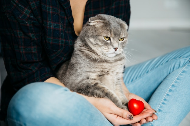 Serious cat sitting on hands of hostess Free Photo
