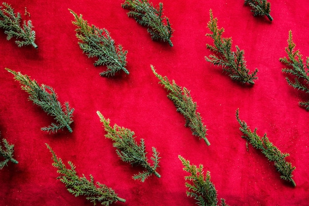 Set of arborvitae branches Free Photo
